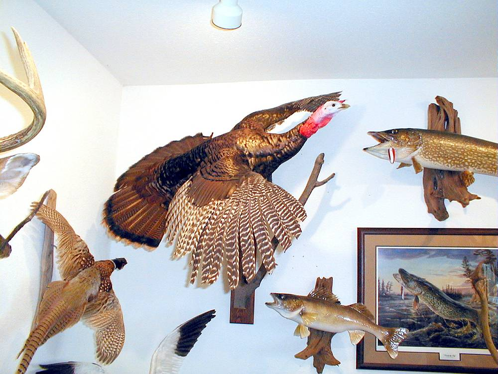 BIRD TAXIDERMYGALLERY