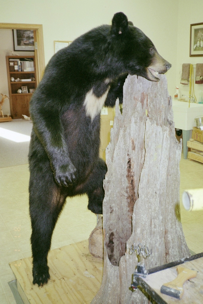LIFE-SIZETAXIDERMY GALLERY